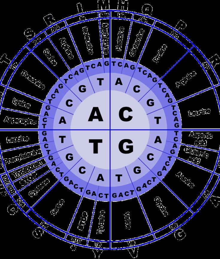 Vad är amino?